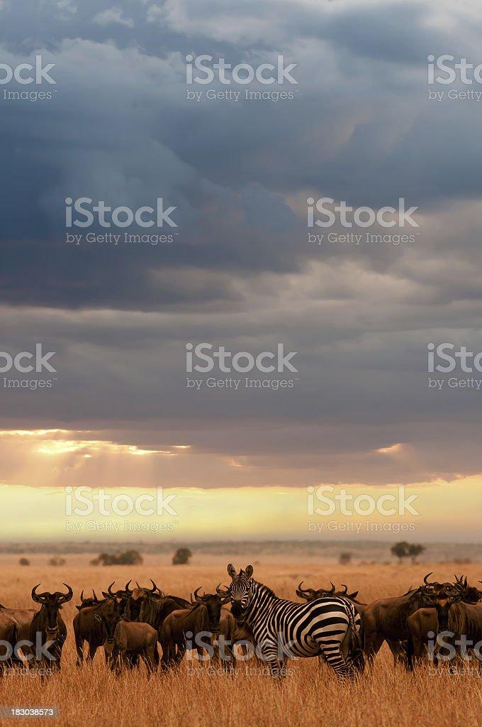 Serengeti stock photo