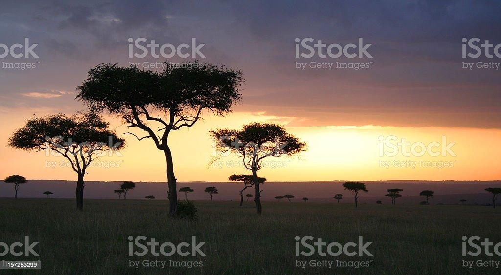 Serengeti Sunset royalty-free stock photo