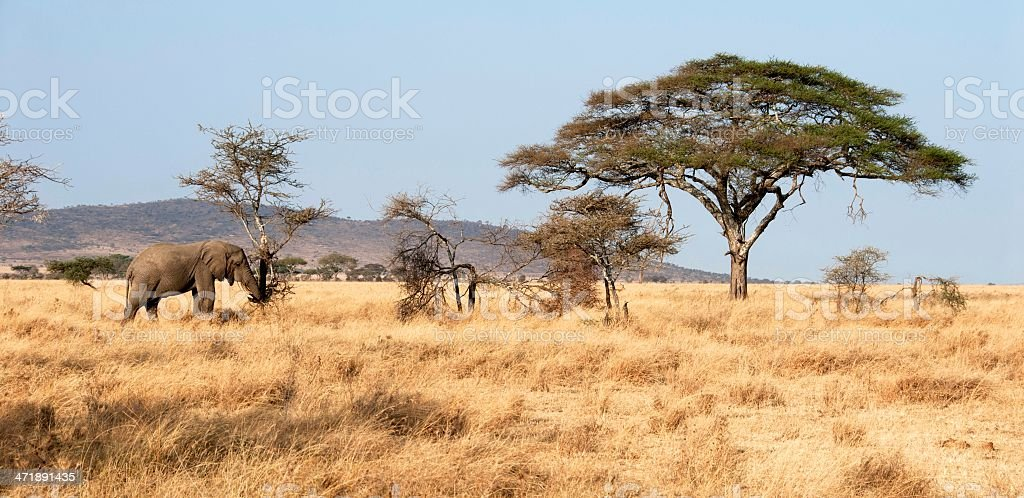 Serengeti Wildlife stock photo