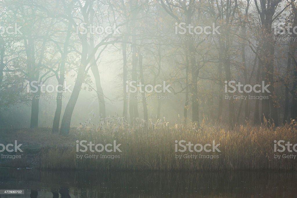 Serenity de la mañana foto de stock libre de derechos