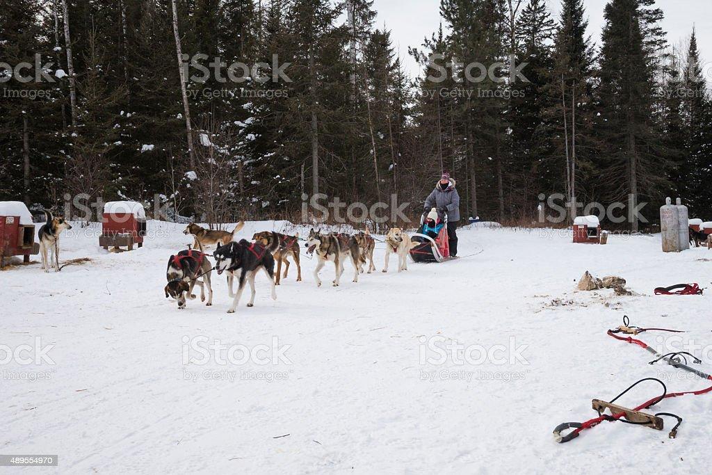 Series dog sledding in northern Minnesota stock photo