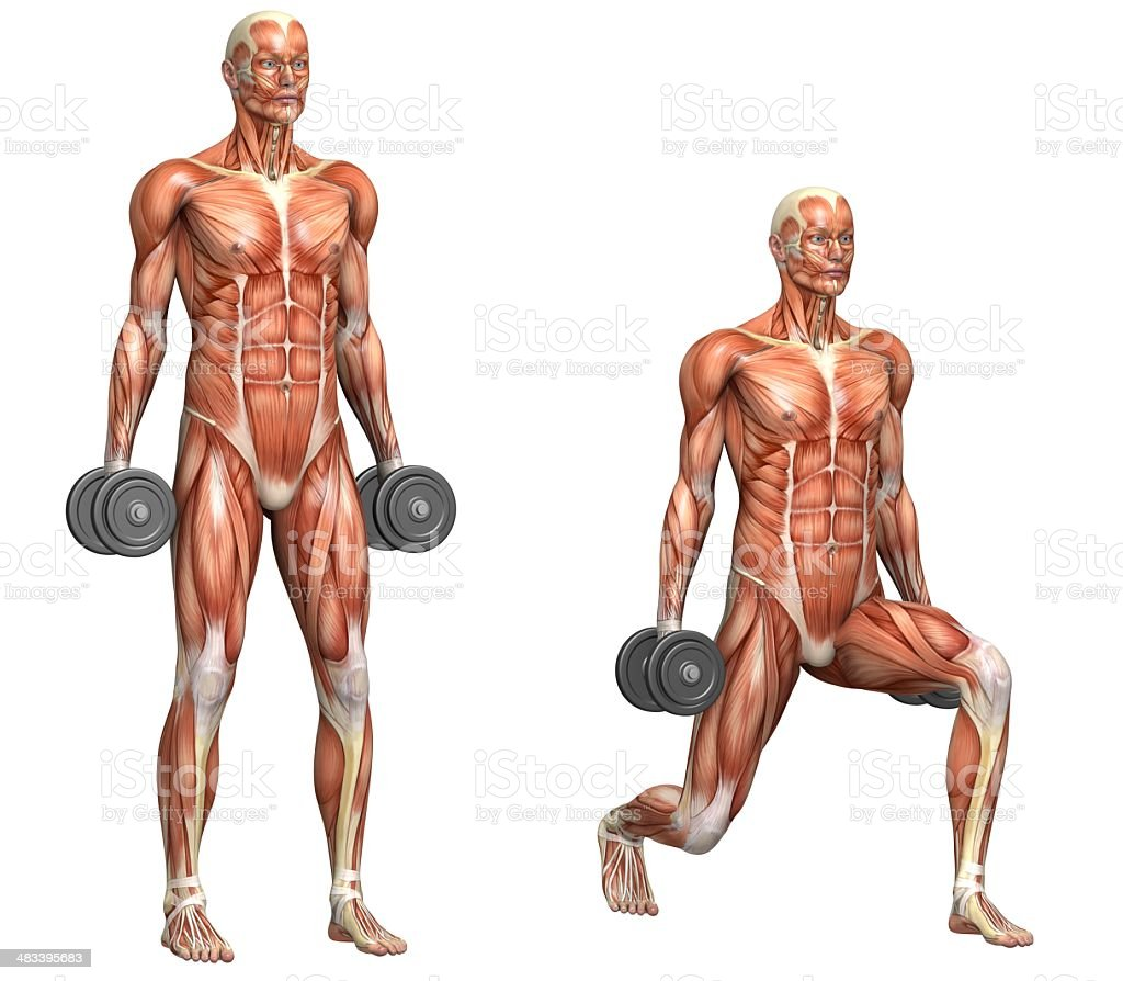 Series of exercises: Dumbbell lunges stock photo
