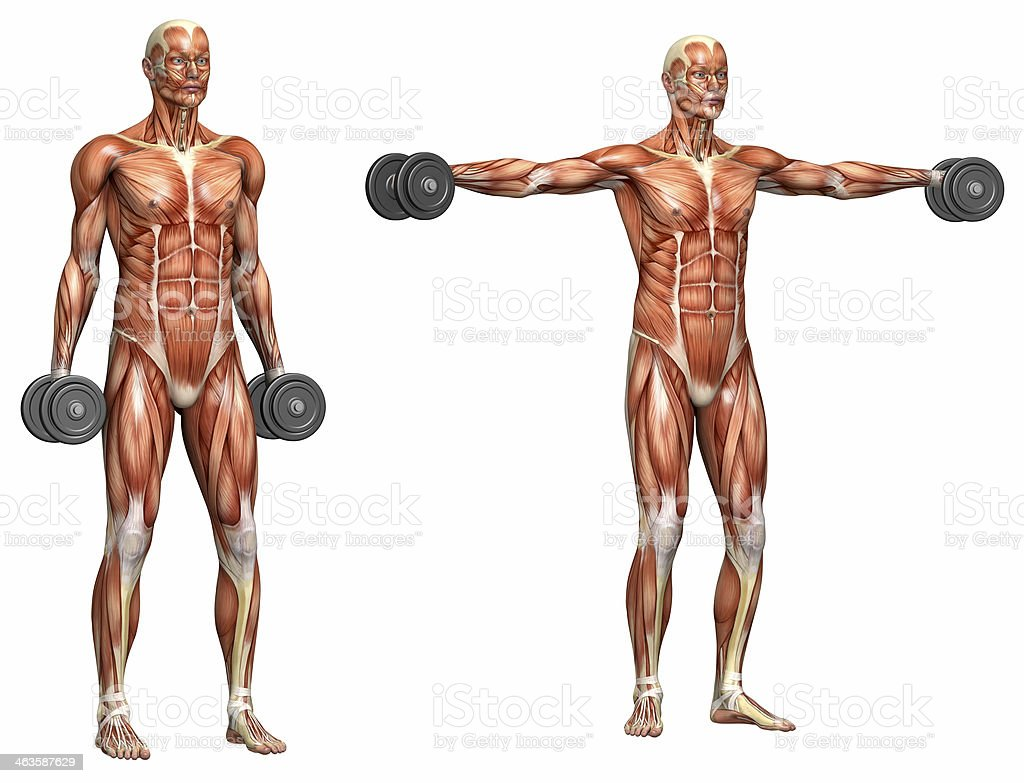 Series of exercises: Lateral raises royalty-free stock photo