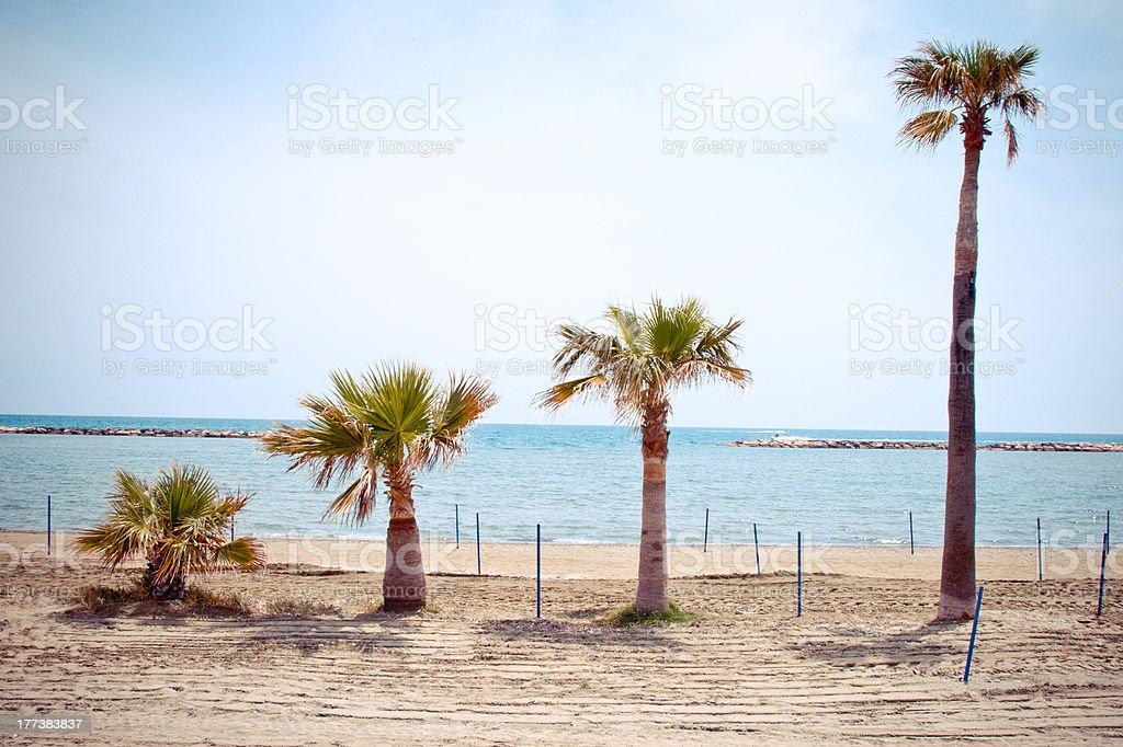 series of growing palms stock photo
