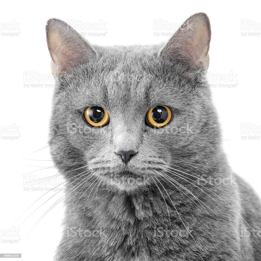 Serious cat stock photo