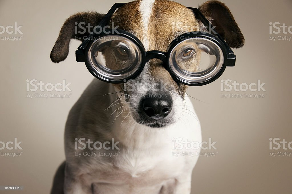 Serious Dog with Geek Glasses stock photo