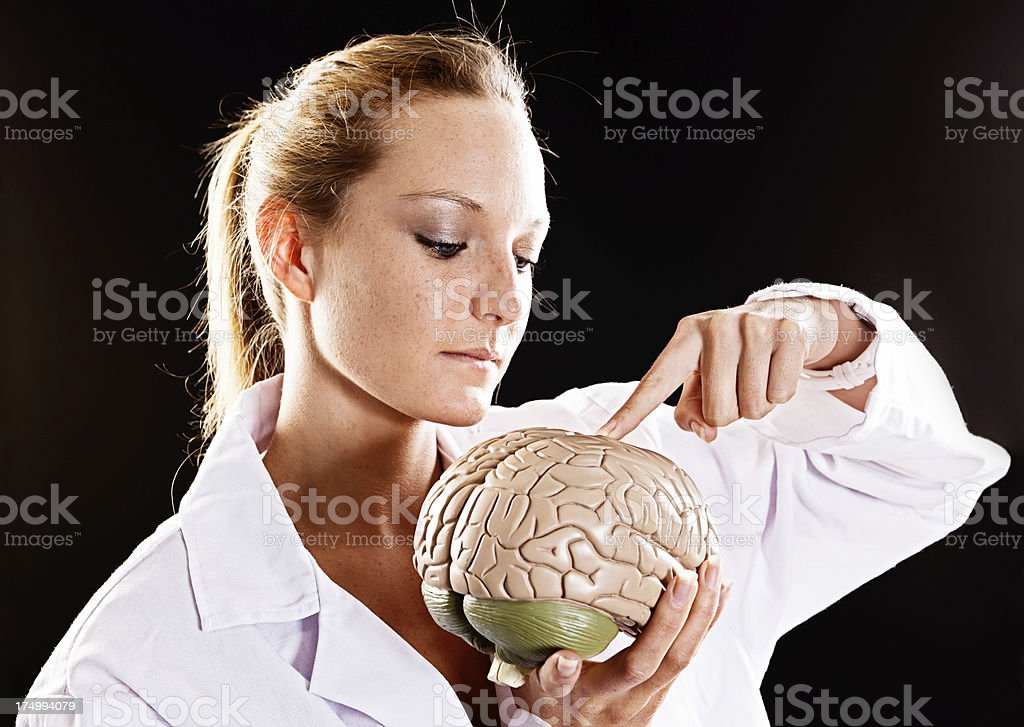 Serious female medical professional points to model brain she holds stock photo