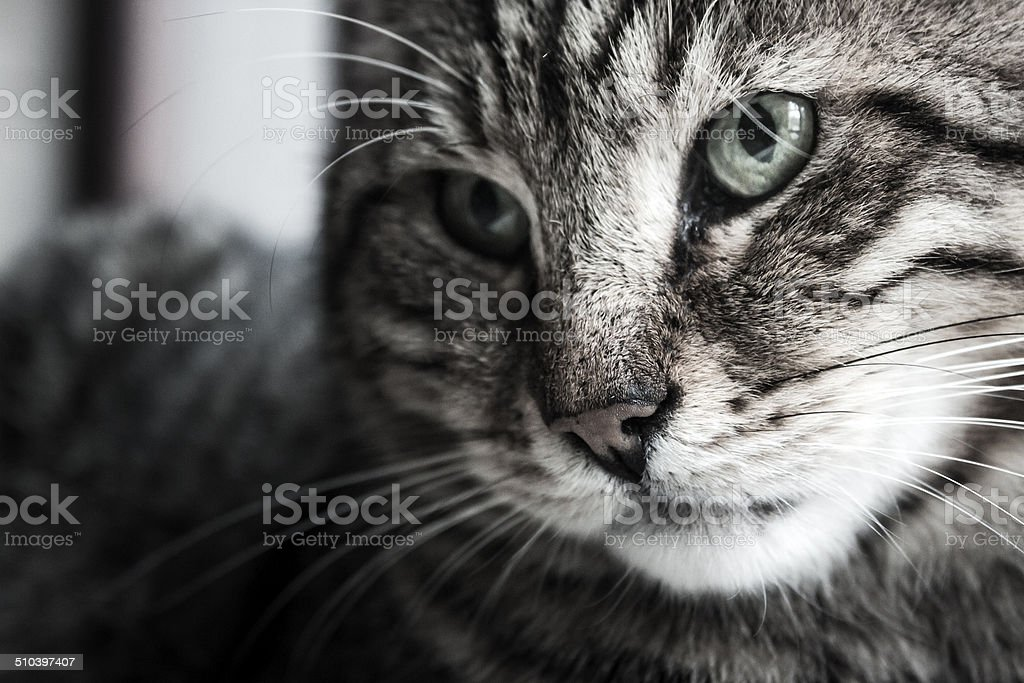 Seriousness royalty-free stock photo