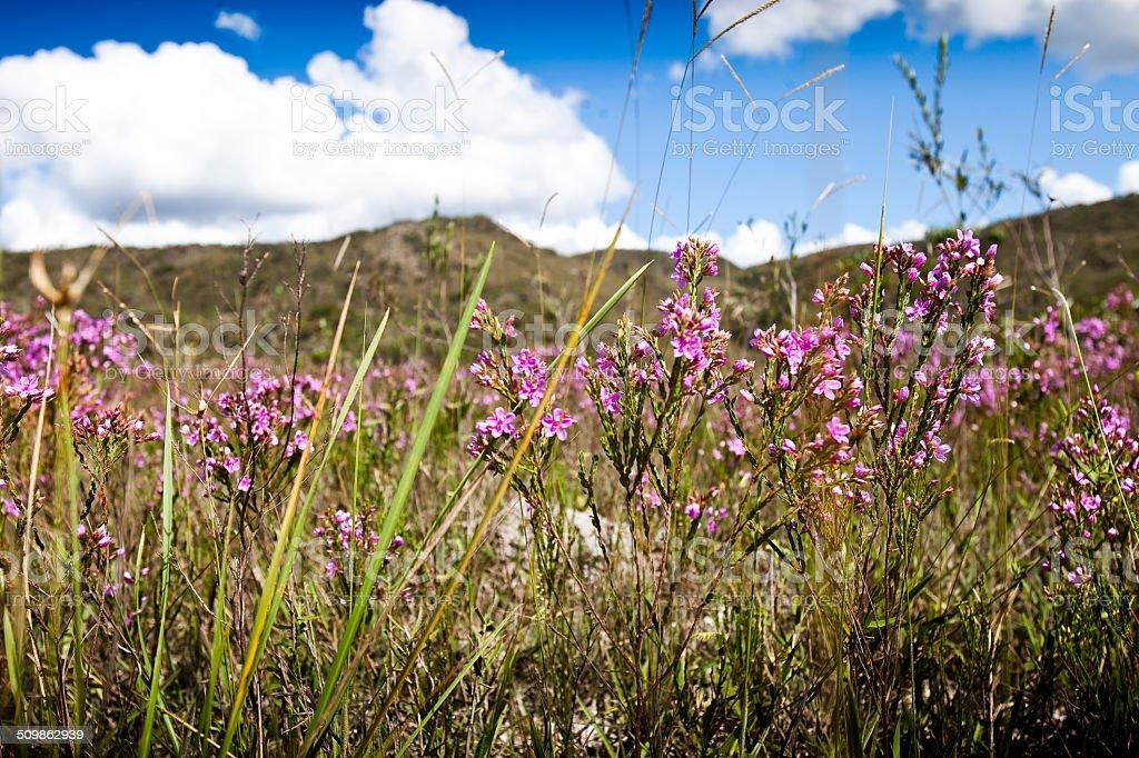 Serra do Cip? stock photo