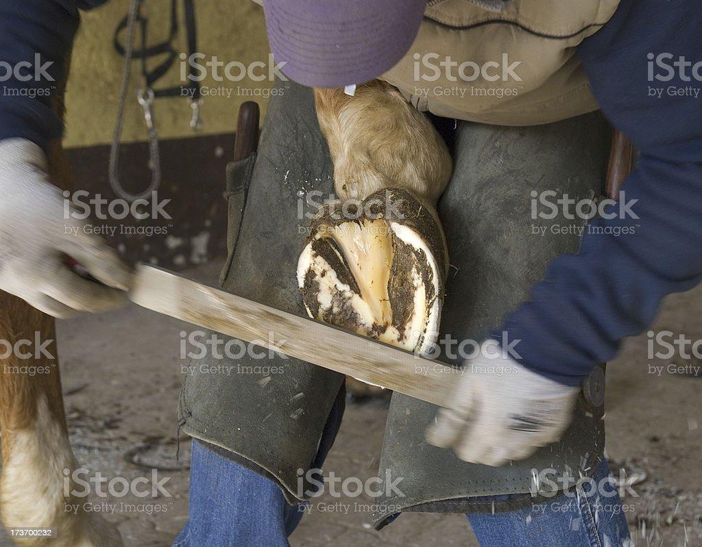 service on horse hoof royalty-free stock photo
