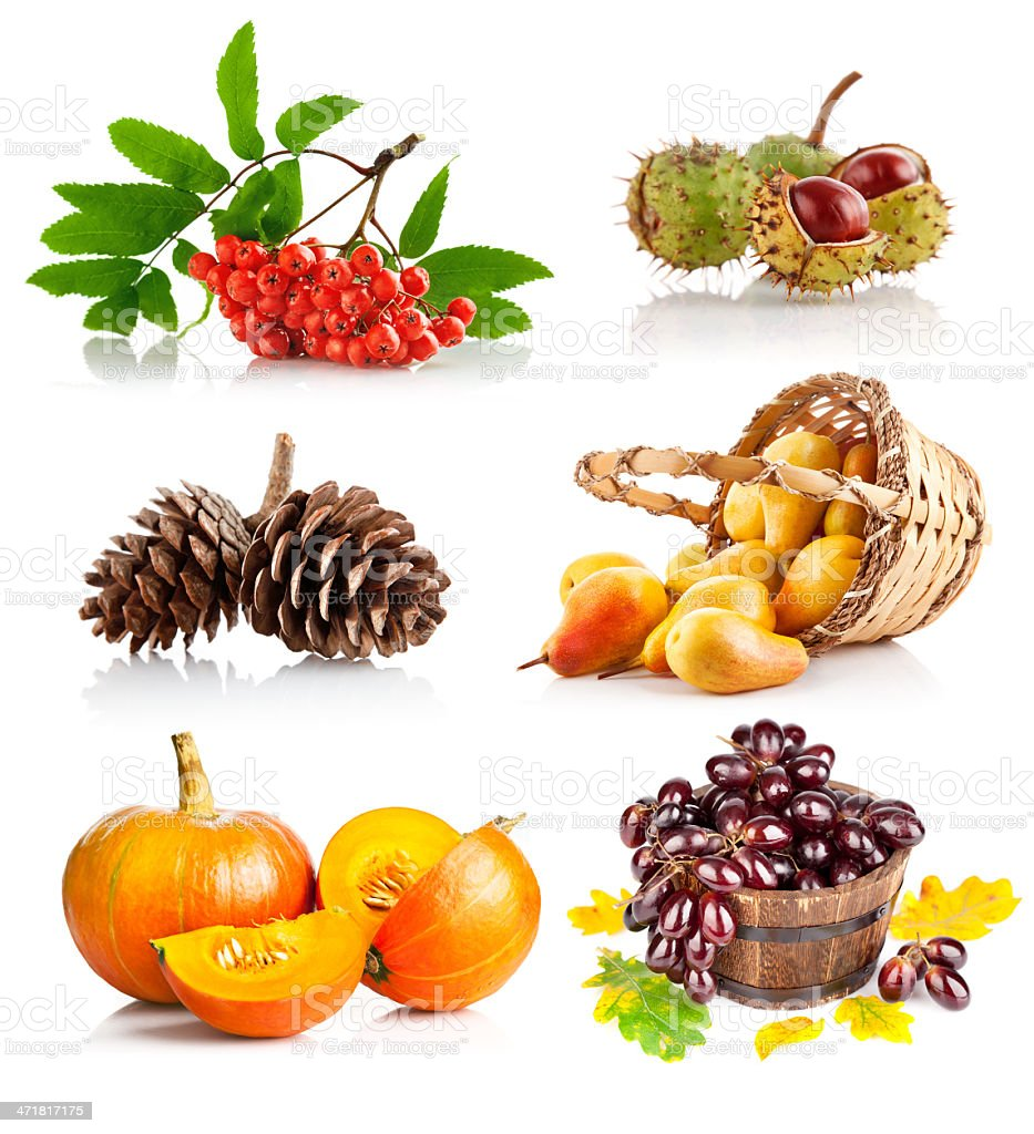 set autumnal vegetables and fruits royalty-free stock photo