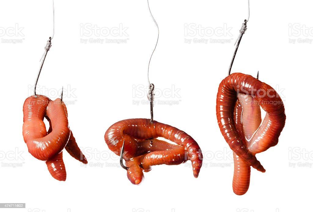 set fishing hooks with earthworms stock photo