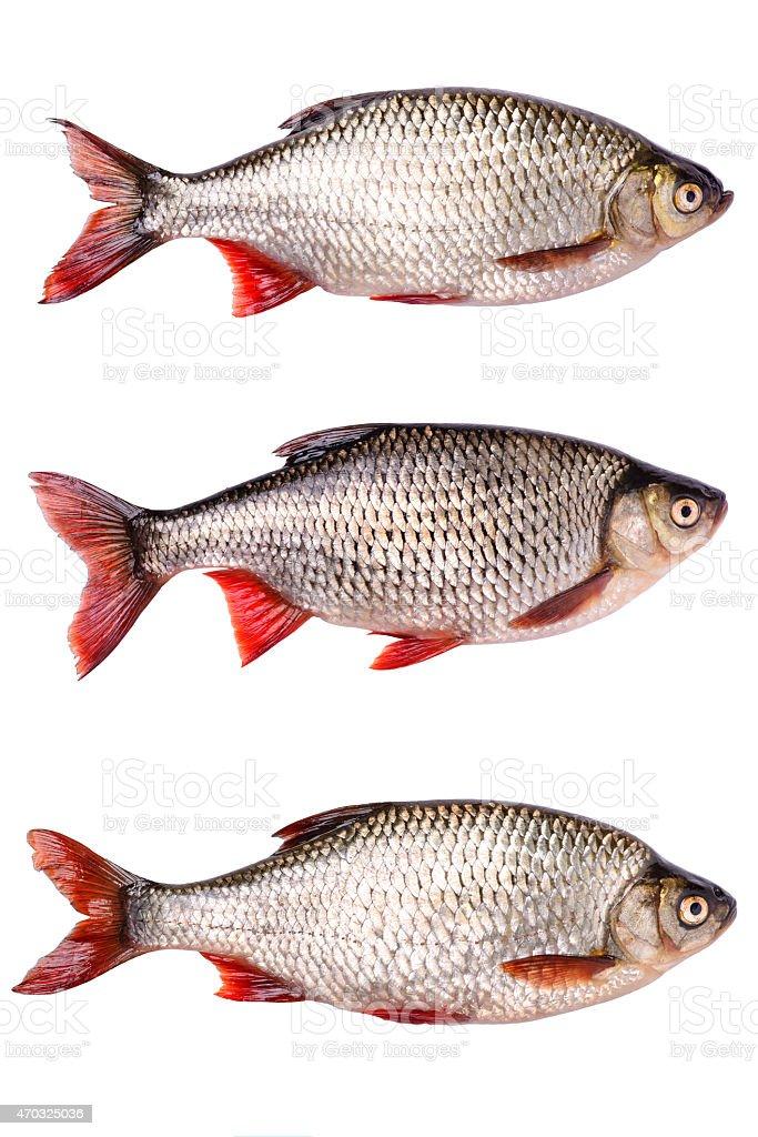 Set fresh raw fish isolated,  clipping path stock photo