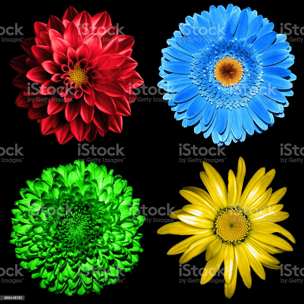 Set of 4 in 1 surreal flowers isolated on black stock photo