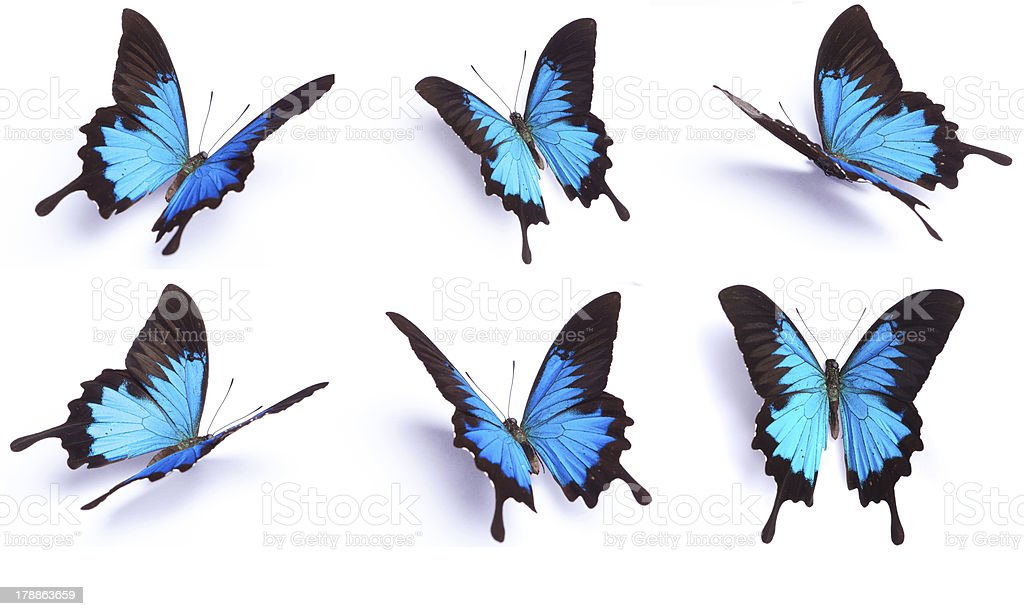 Set of 6 Blue butterfly isolated on white background stock photo