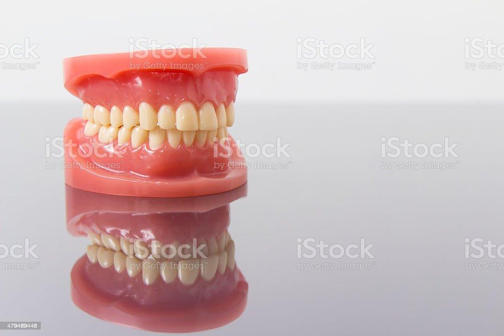 Set of artificial false teeth stock photo