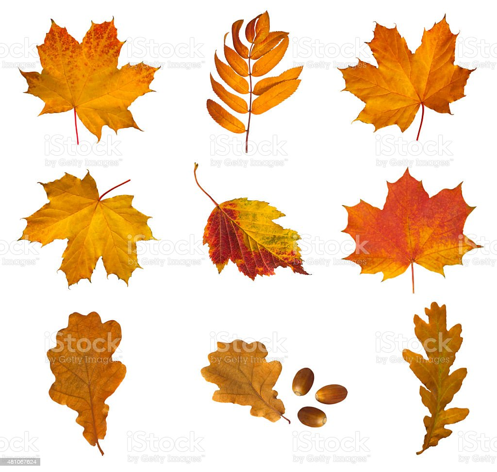 Set of autumn leaves stock photo