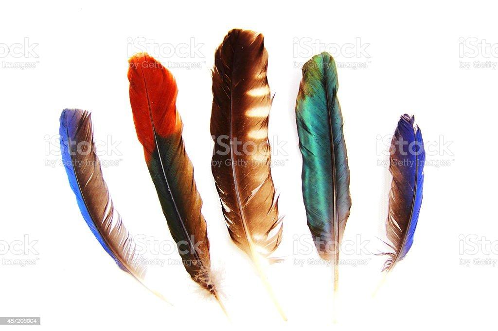 Set of bird feathers. stock photo