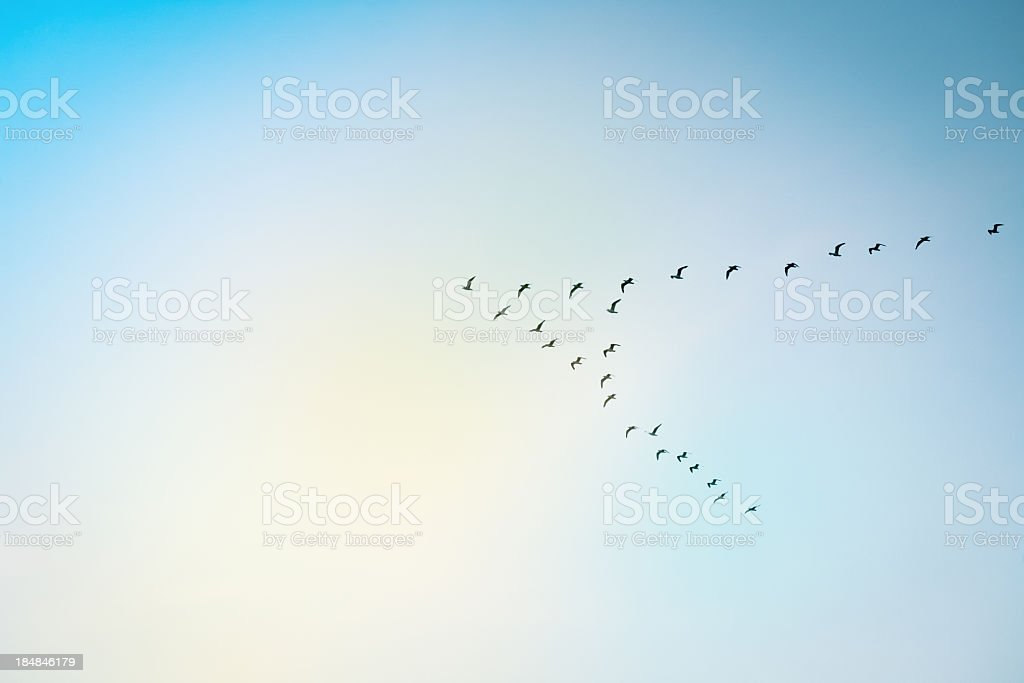 A set of birds migrating against a blue sky stock photo