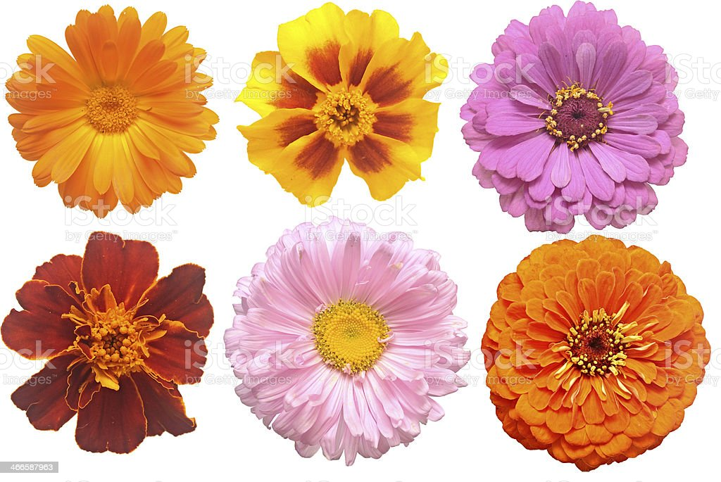Set of blooming variety flowers stock photo