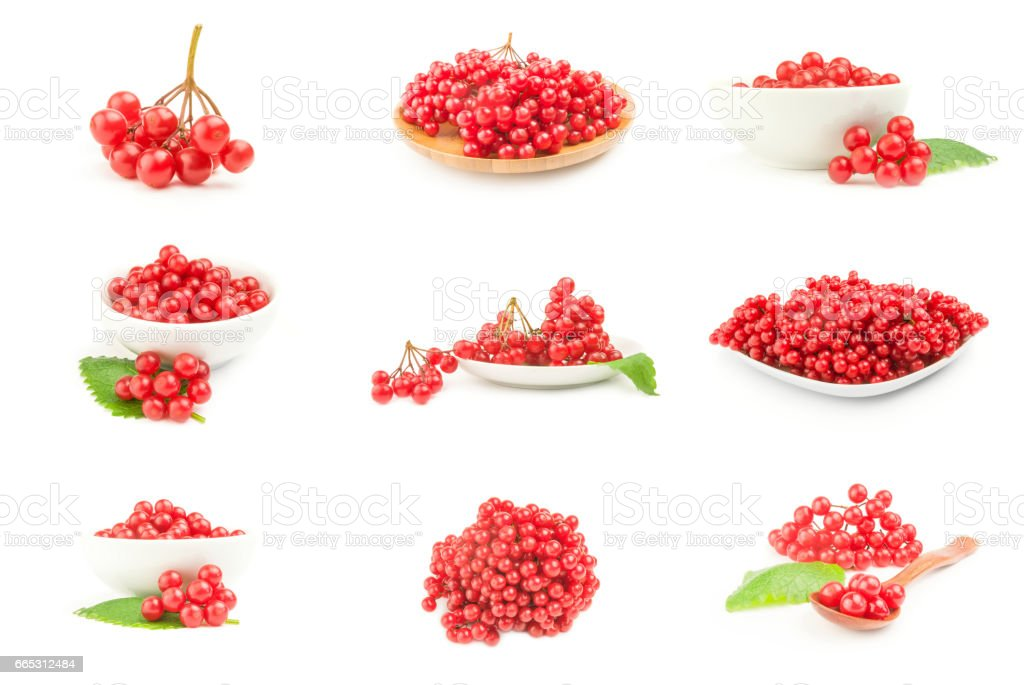 Set of branch of red viburnum berries  isolated on a white background cutout stock photo