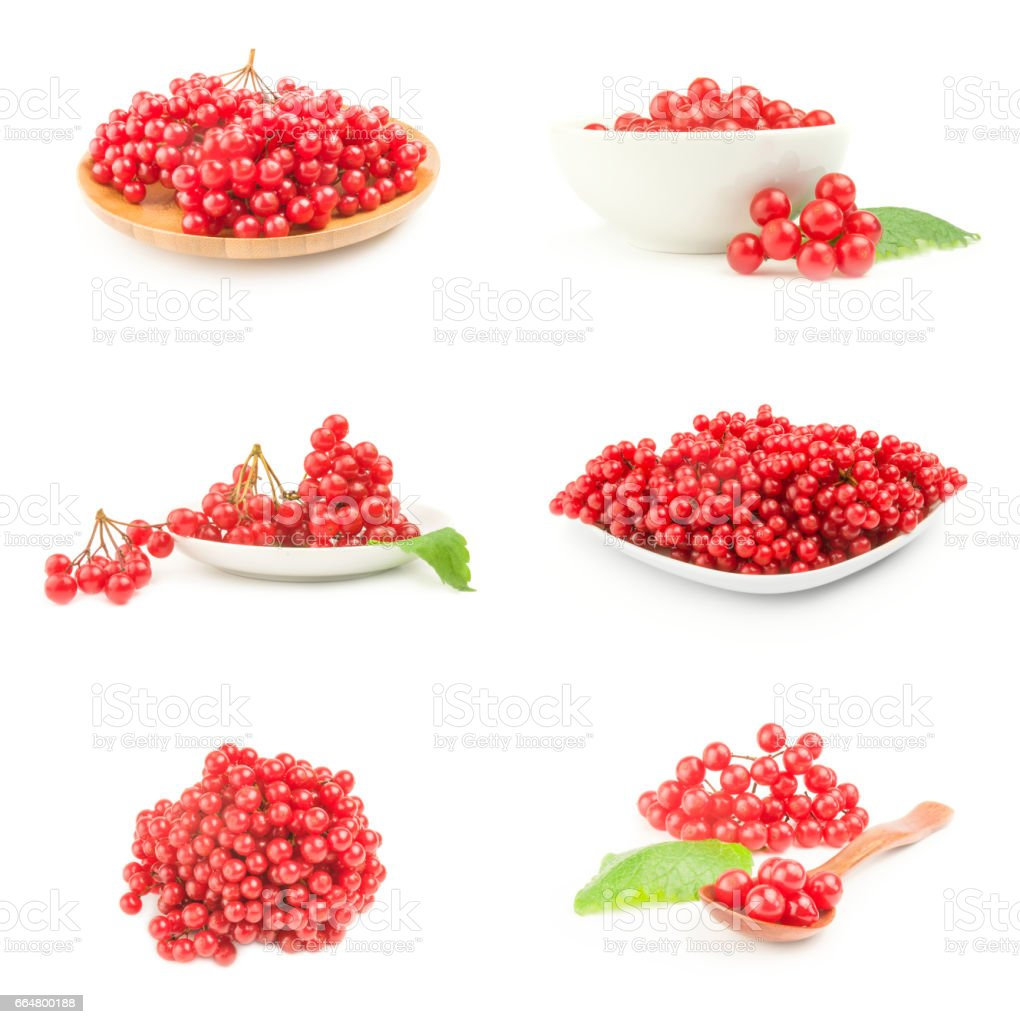 Set of bunches of red viburnum on a white background cutout stock photo
