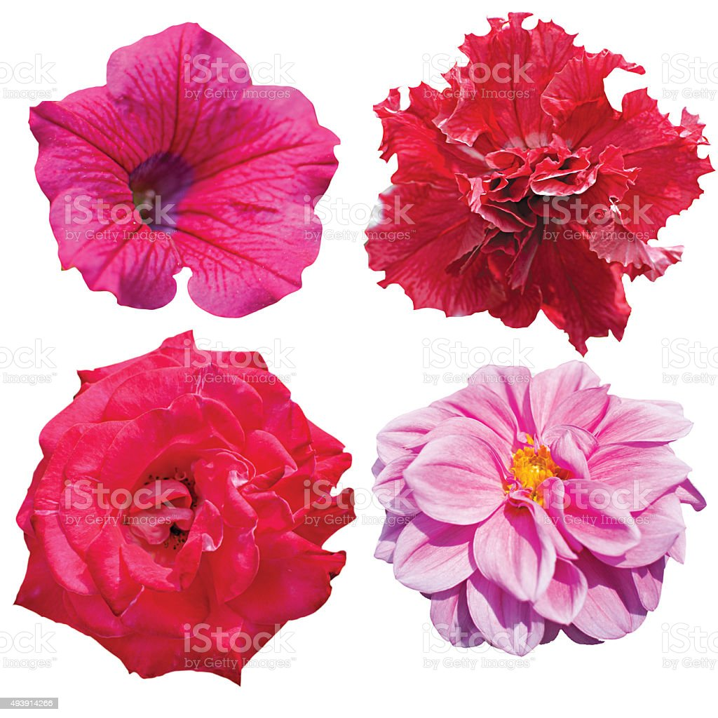 Set of colorful seasonal blooms flower stock photo