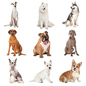 Set of common dogs