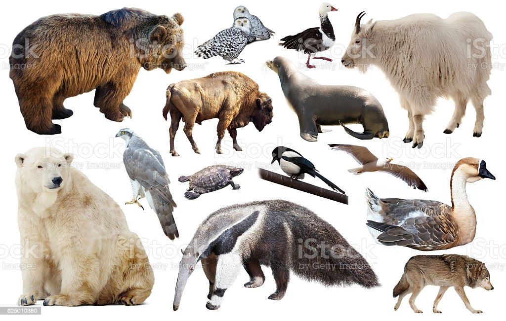 Set of fauna of North American animals. stock photo