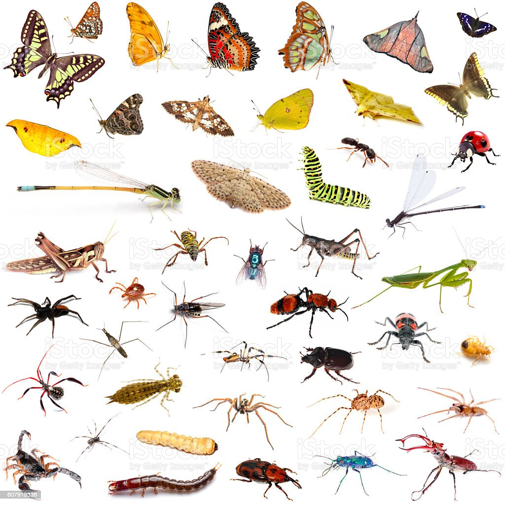 Set of insects over white background stock photo