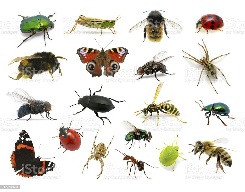 Set of insects stock photo