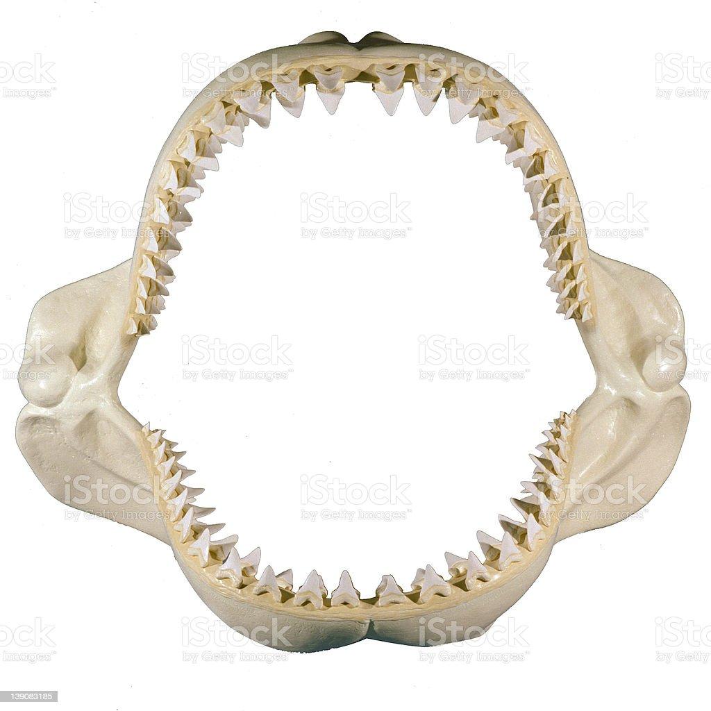 set of jaws. stock photo