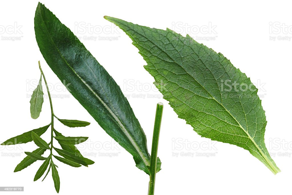 Set of Leaf stock photo