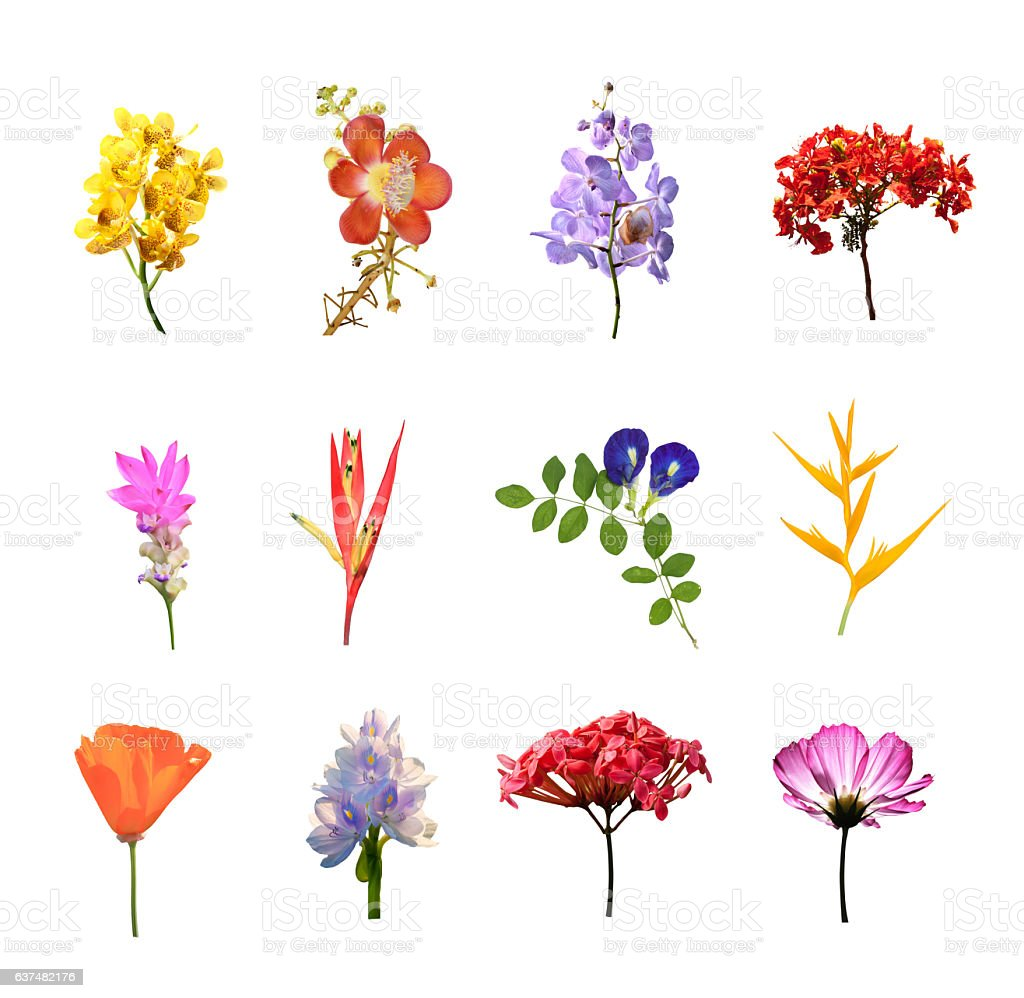 set of many colouul flowers isolated collection on white stock photo