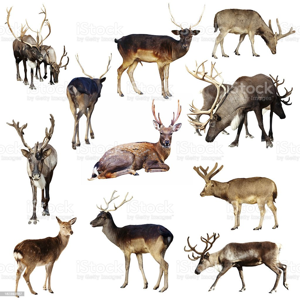 Set of many deer royalty-free stock photo