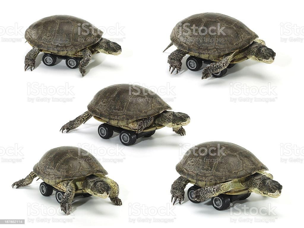 set of mobile turtle over white backgrounds royalty-free stock photo
