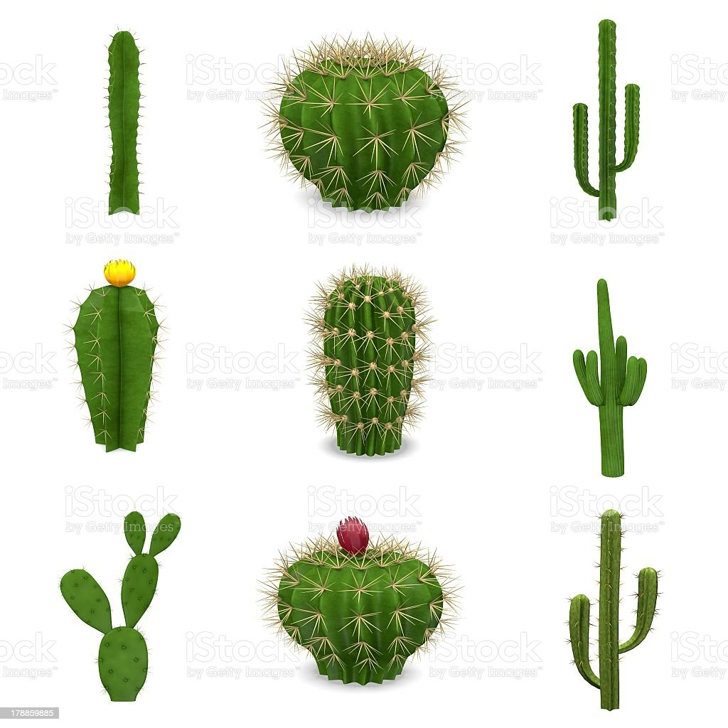 A set of nine cacti isolated on a white background stock photo
