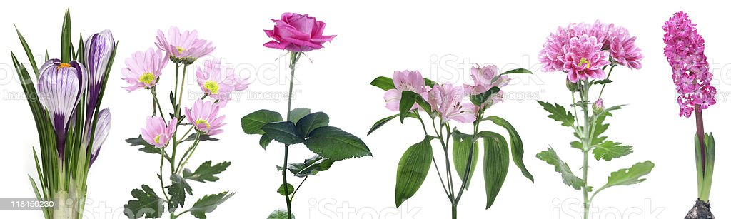 set of pink flowers royalty-free stock photo