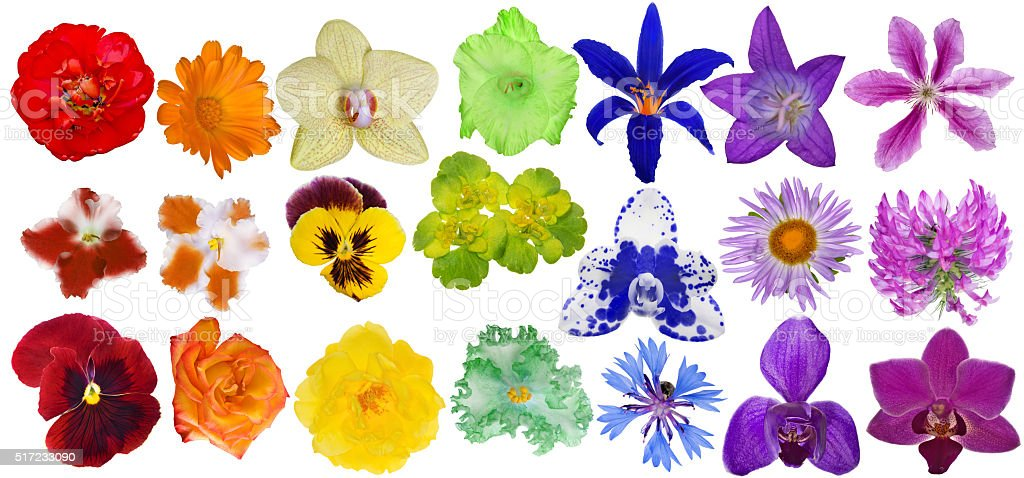 set of rainbow colors blooms isolated on white stock photo