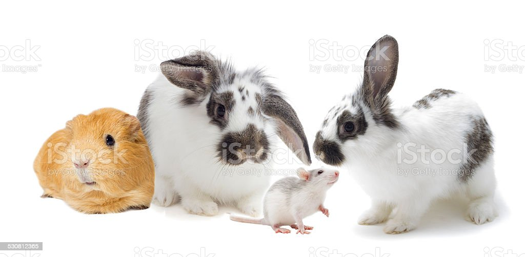 set of rodents stock photo