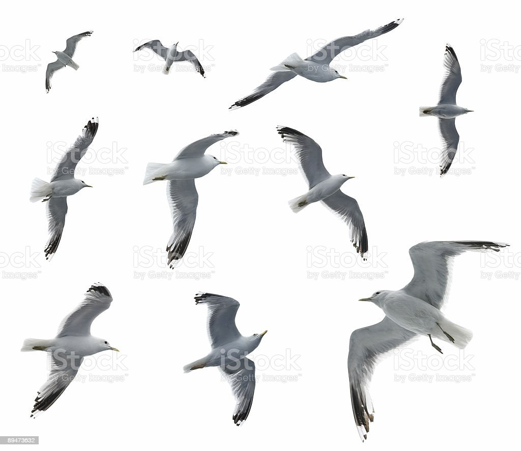 Set of sea gulls stock photo