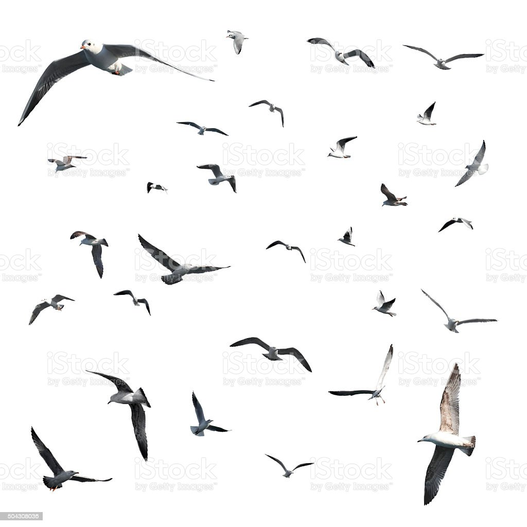 Set of Seagulls (Clipping Path) stock photo