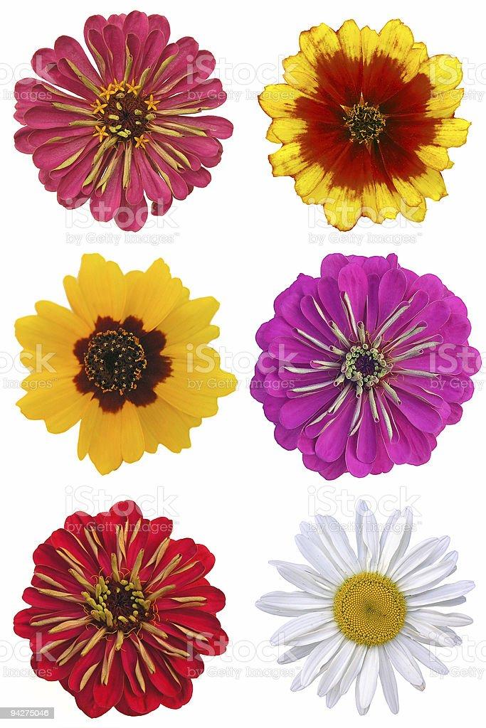 Set of six flowers royalty-free stock photo