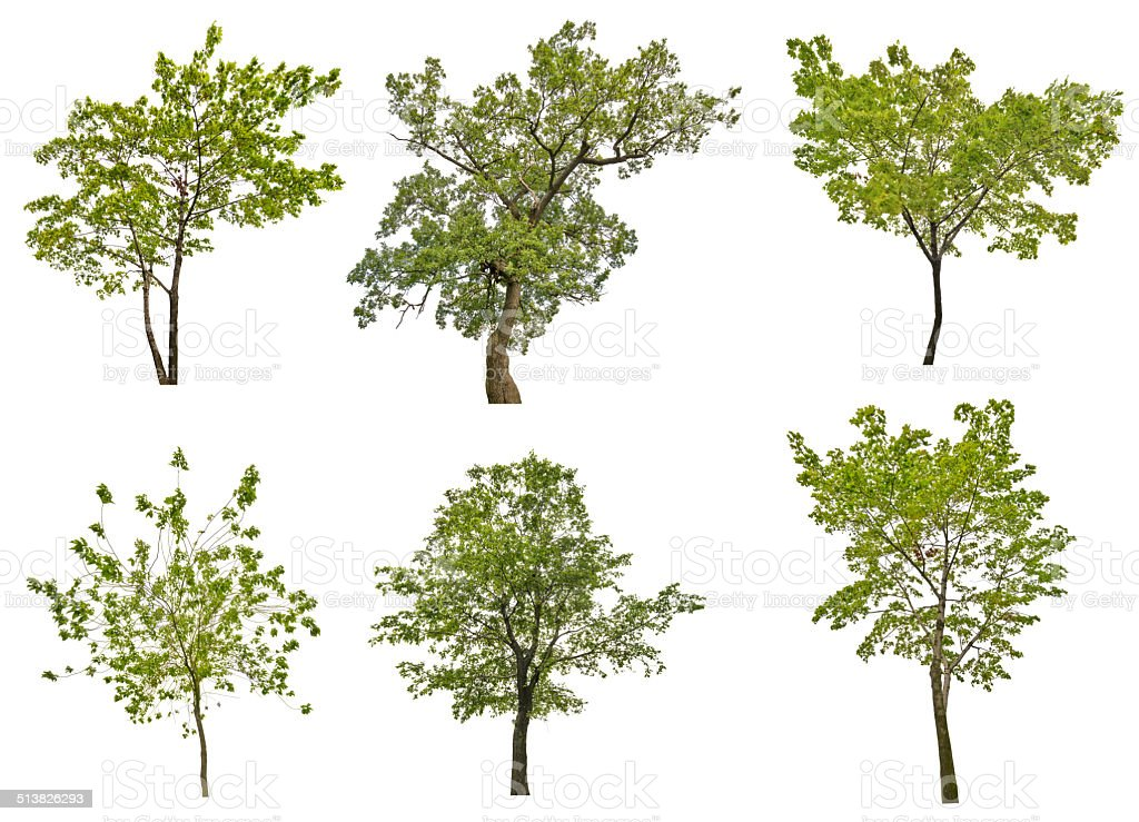 set of six green summer trees isolated on white stock photo