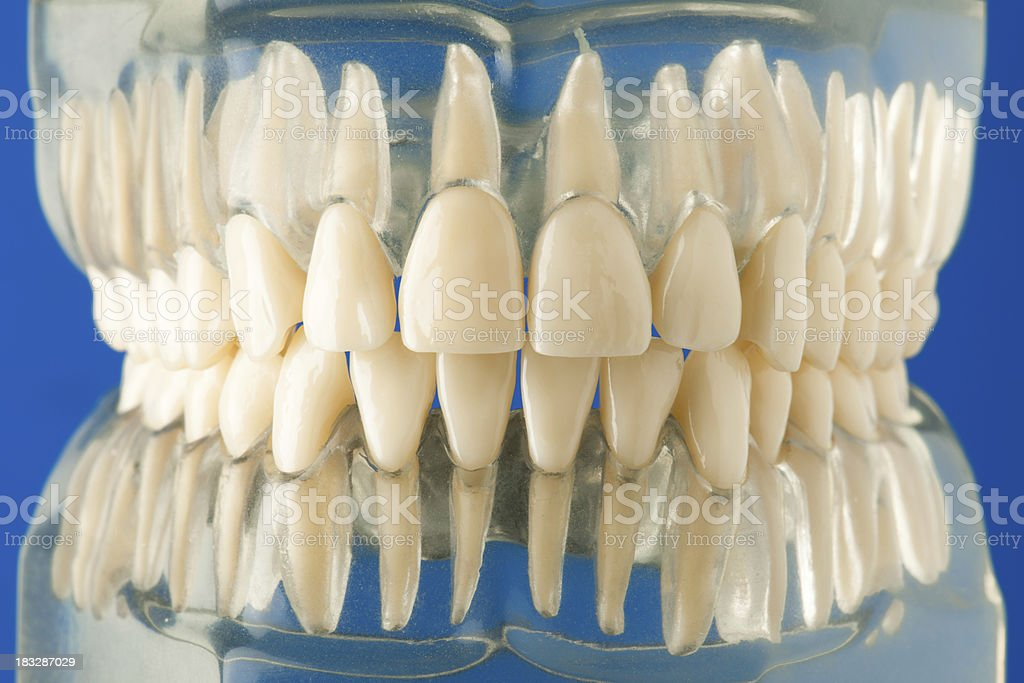 set of teeth stock photo