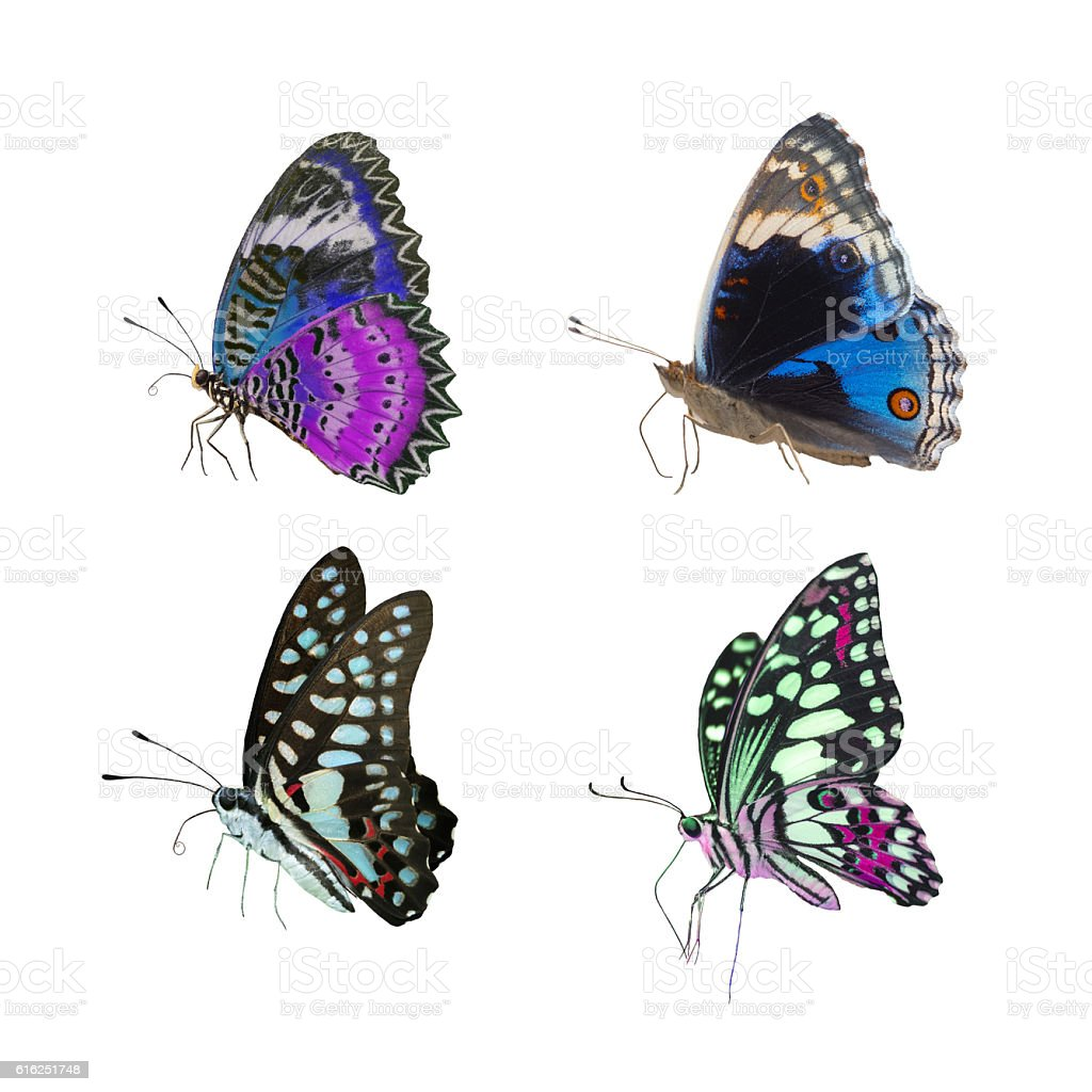 Set of the most beautiful butterflies stock photo