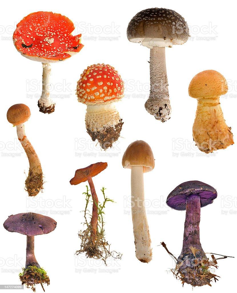 set of toadstools stock photo