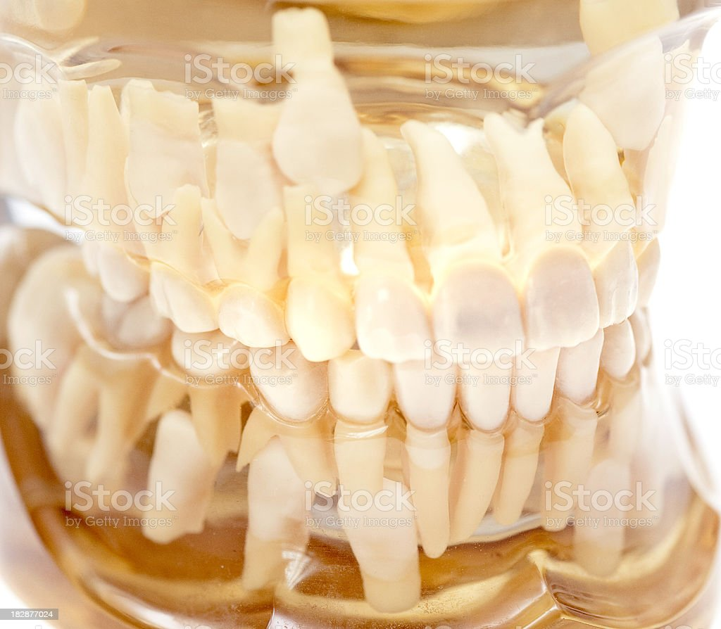 set of transparent teeth - Transparentes gebiss stock photo