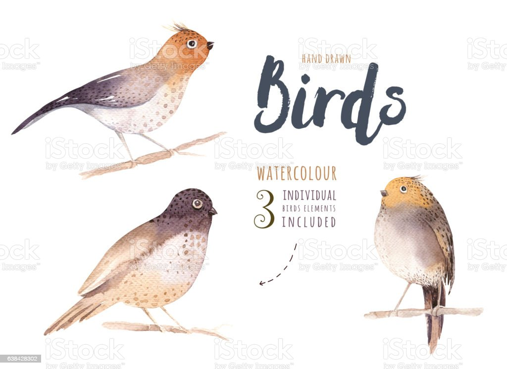 Set of watercolor birds.  isolated bird illustration on a white stock photo