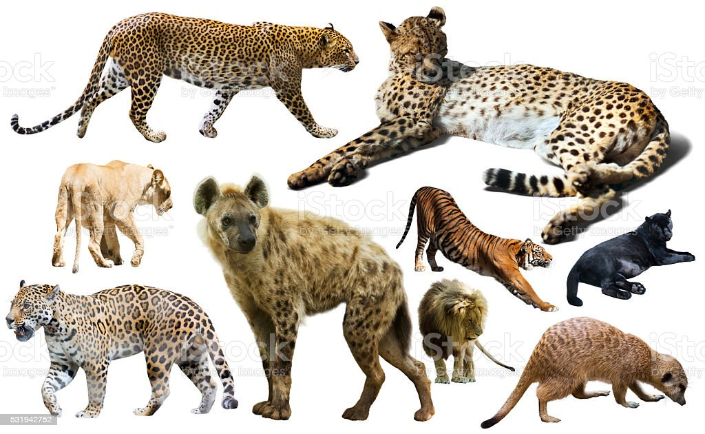 Set of wild mammals isolated over white stock photo